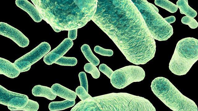bacterii anaerobe)